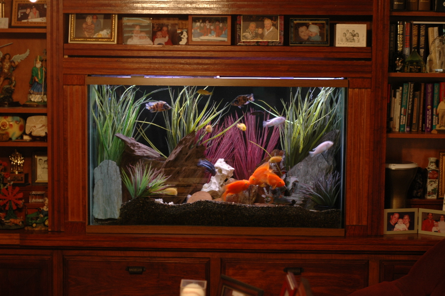 This would be cool to have built in fish tank for the for Built in fish tank